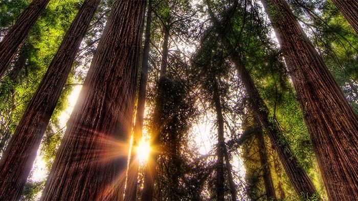 Luz do sol brilhando entre as árvores de em um bosque